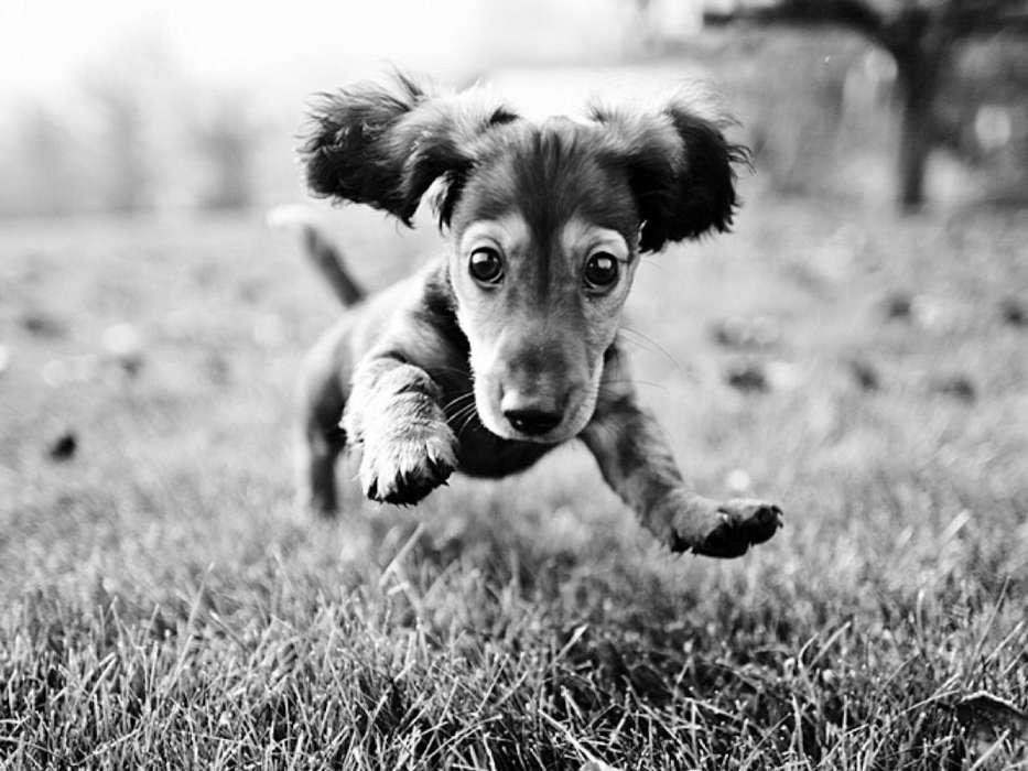 Прощении, прикольные картинки с собаками на телефон