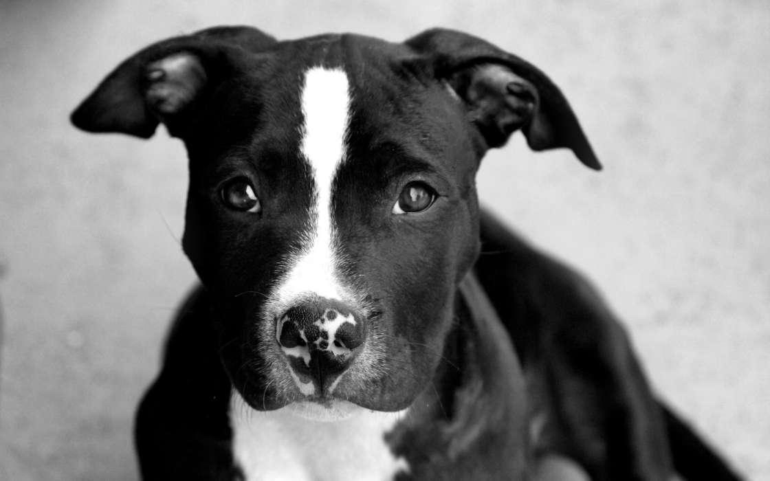 Download Bilder für das Handy: Tiere, Hunde, kostenlos. 21374