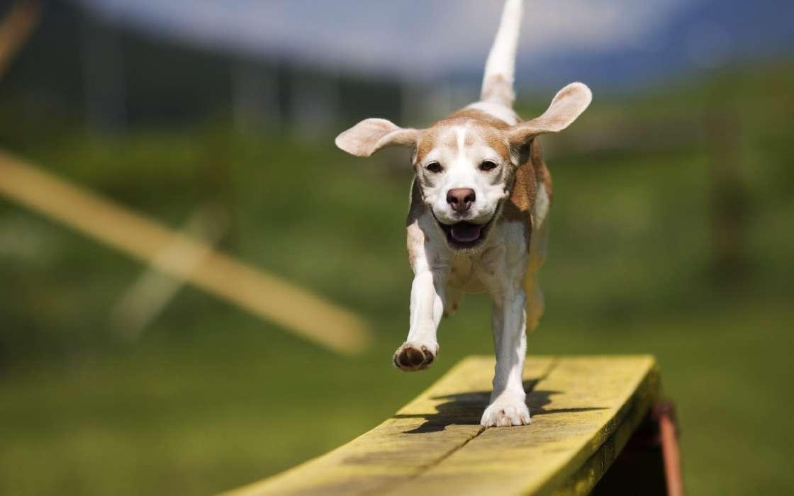 Картинка собачки приколы, анекдоты