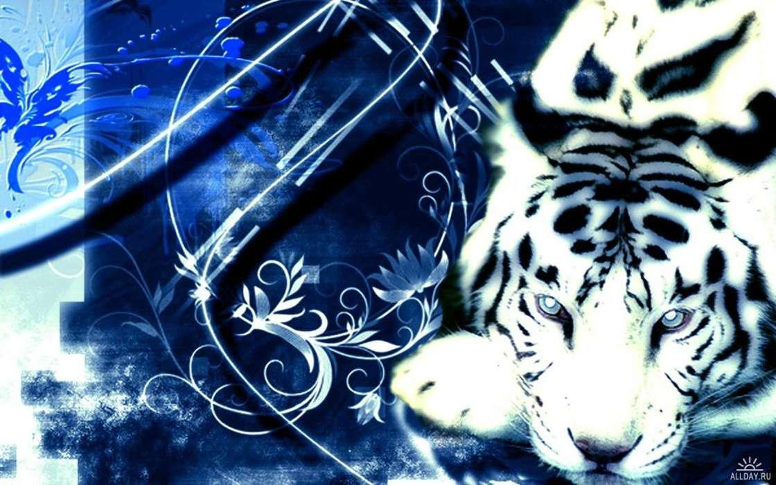 Download Bilder für das Handy: Tiere, Tigers, kostenlos. 10430