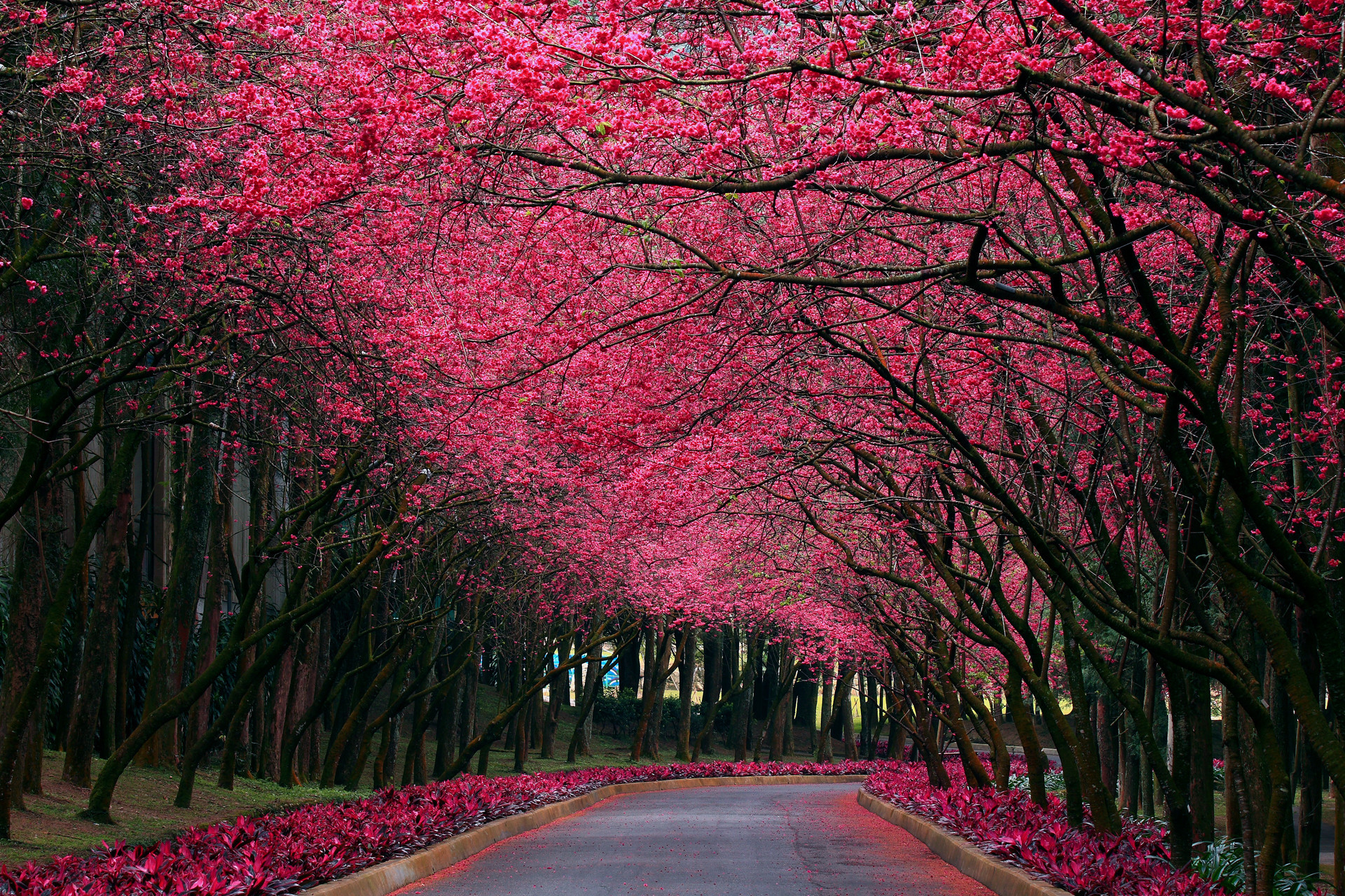 Download mobile wallpaper Landscape, Flowers, Trees, Roads for free.