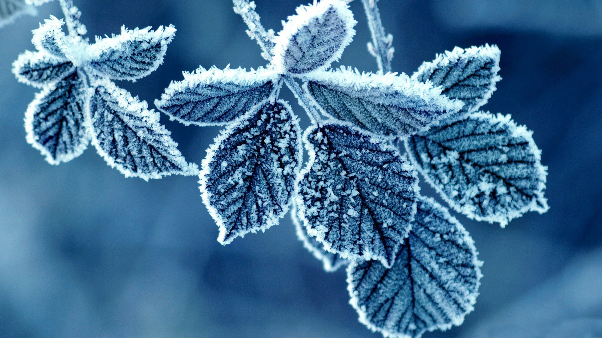 Download mobile wallpaper Winter, Background, Leaves, Snow for free.