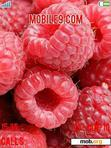 Download mobile theme Raspberries