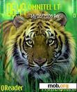 Download mobile theme tiger