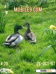 Download mobile theme ducks