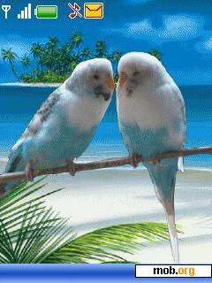 download free animated love birds theme for symbian s40 3rd edition
