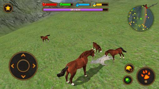 Clan of horse auf Deutsch