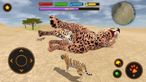Tiere Clan of tigers auf Deutsch