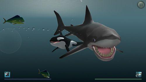 Simulator-Spiele: Lade Ich bin Delfin auf dein Handy herunter