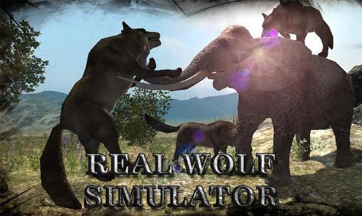Real wolf simulator Screenshot