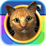 Insta kitty 3D icono