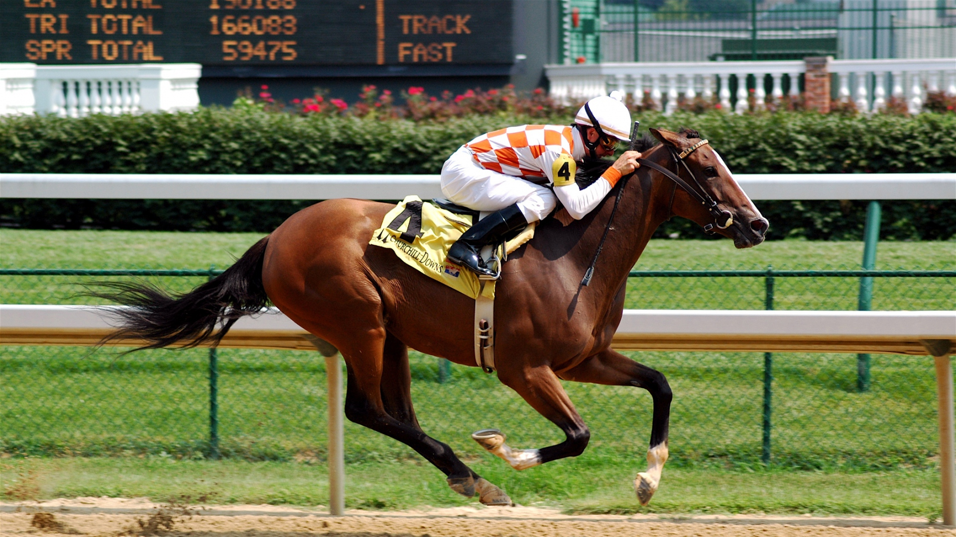 free Horse racing games
