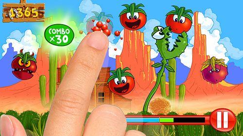 Petite tomate: Ere des tomates