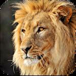 Talking lion Symbol