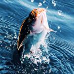 Иконка Real fishing pro 3D
