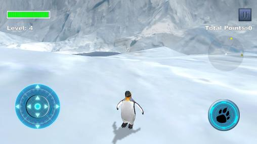 Arctic penguin auf Deutsch