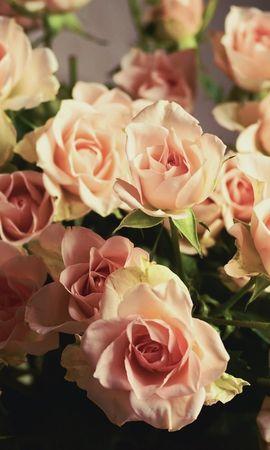 18964 скачать обои Растения, Цветы, Розы, Букеты - заставки и картинки бесплатно