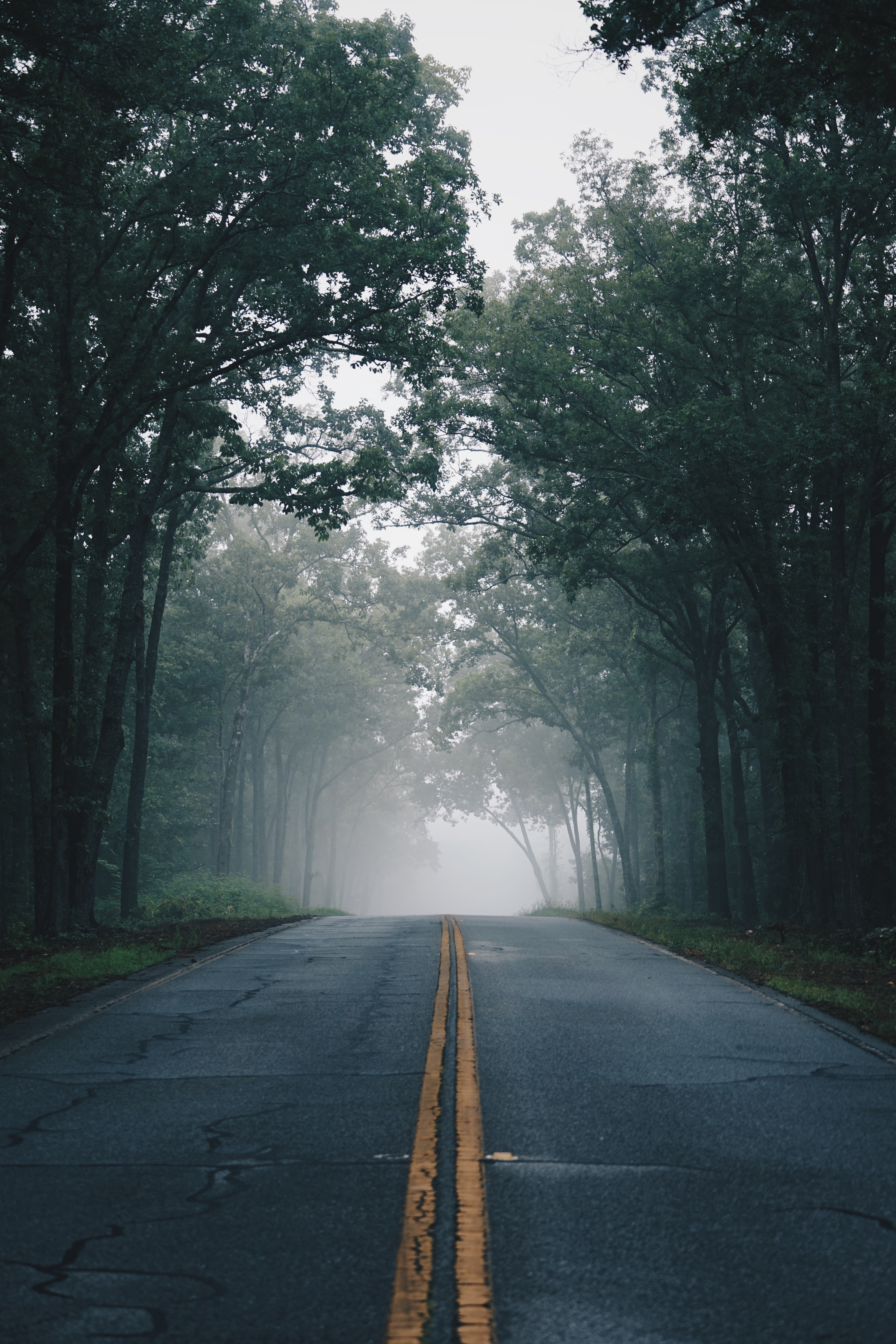 84362 Screensavers and Wallpapers Markup for phone. Download Nature, Trees, Road, Markup, Fog, Asphalt pictures for free