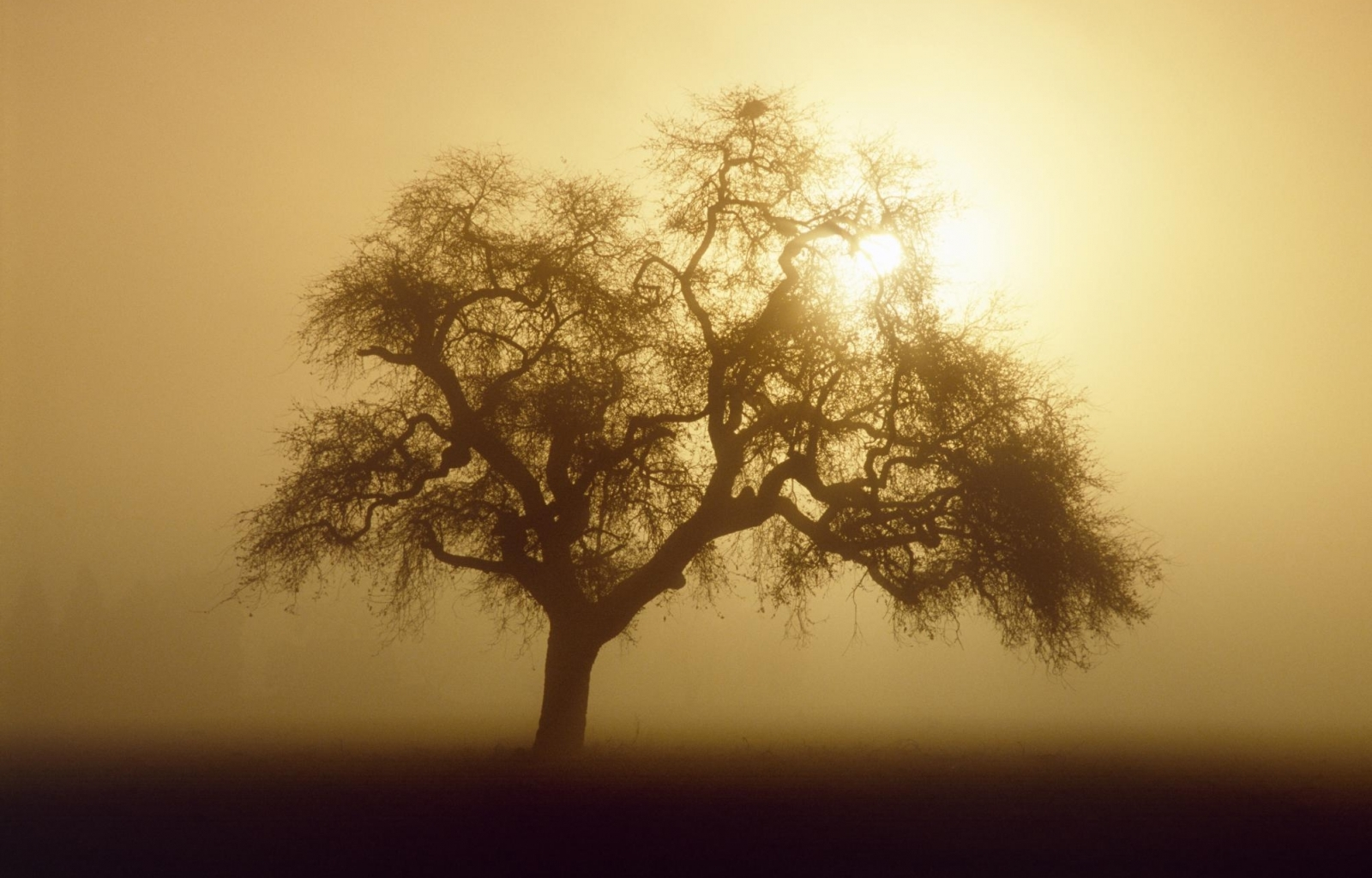 5614 download wallpaper Landscape, Trees, Sun screensavers and pictures for free