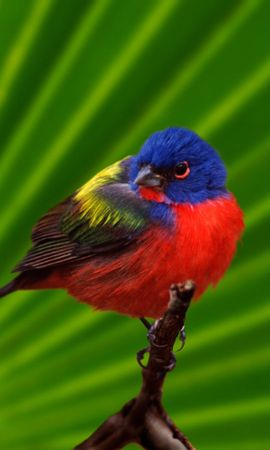 8205 download wallpaper Animals, Birds screensavers and pictures for free