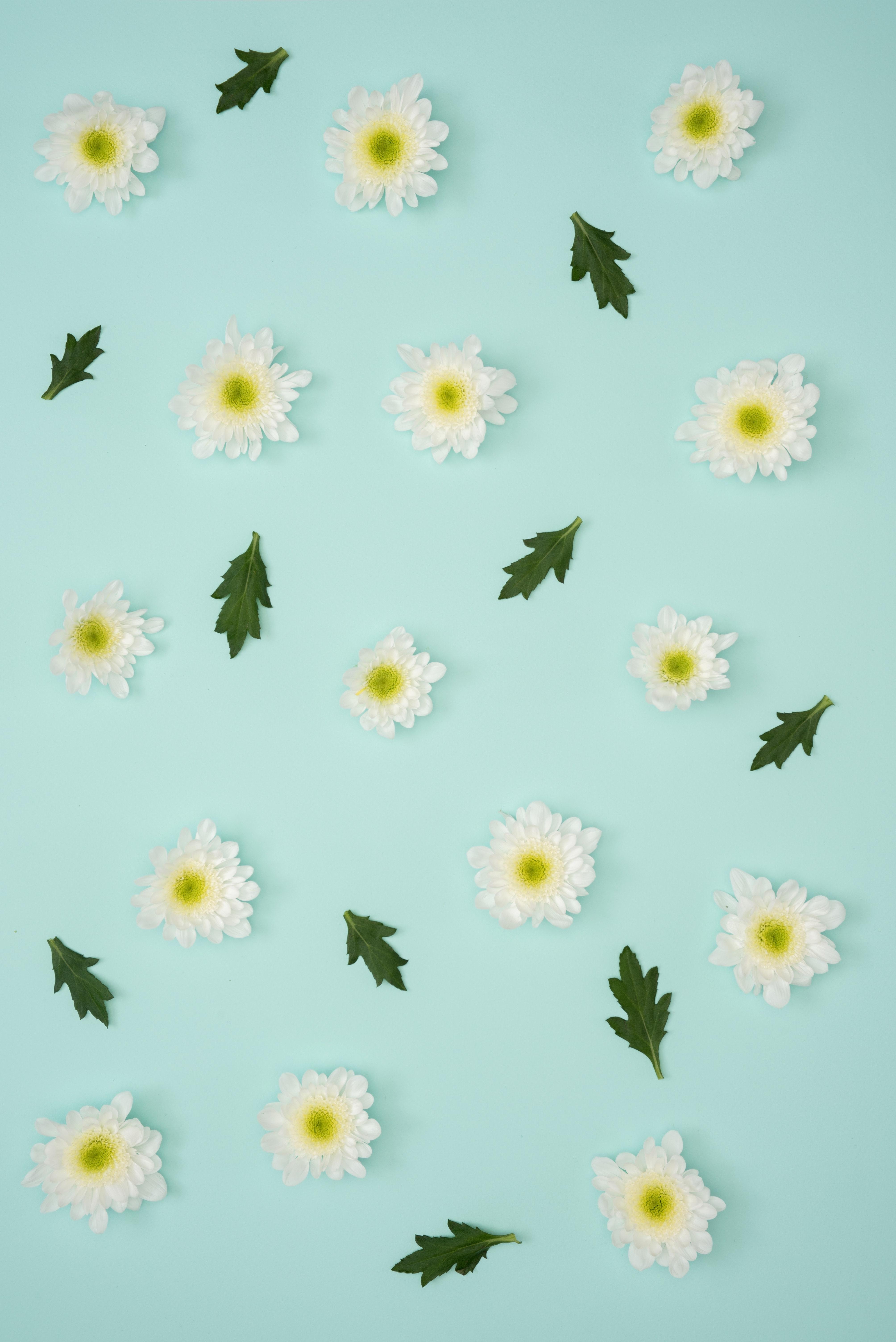 無料の壁紙をダウンロード100702:携帯電話用のミニマリズム, カモミール, 葉, パステル壁紙