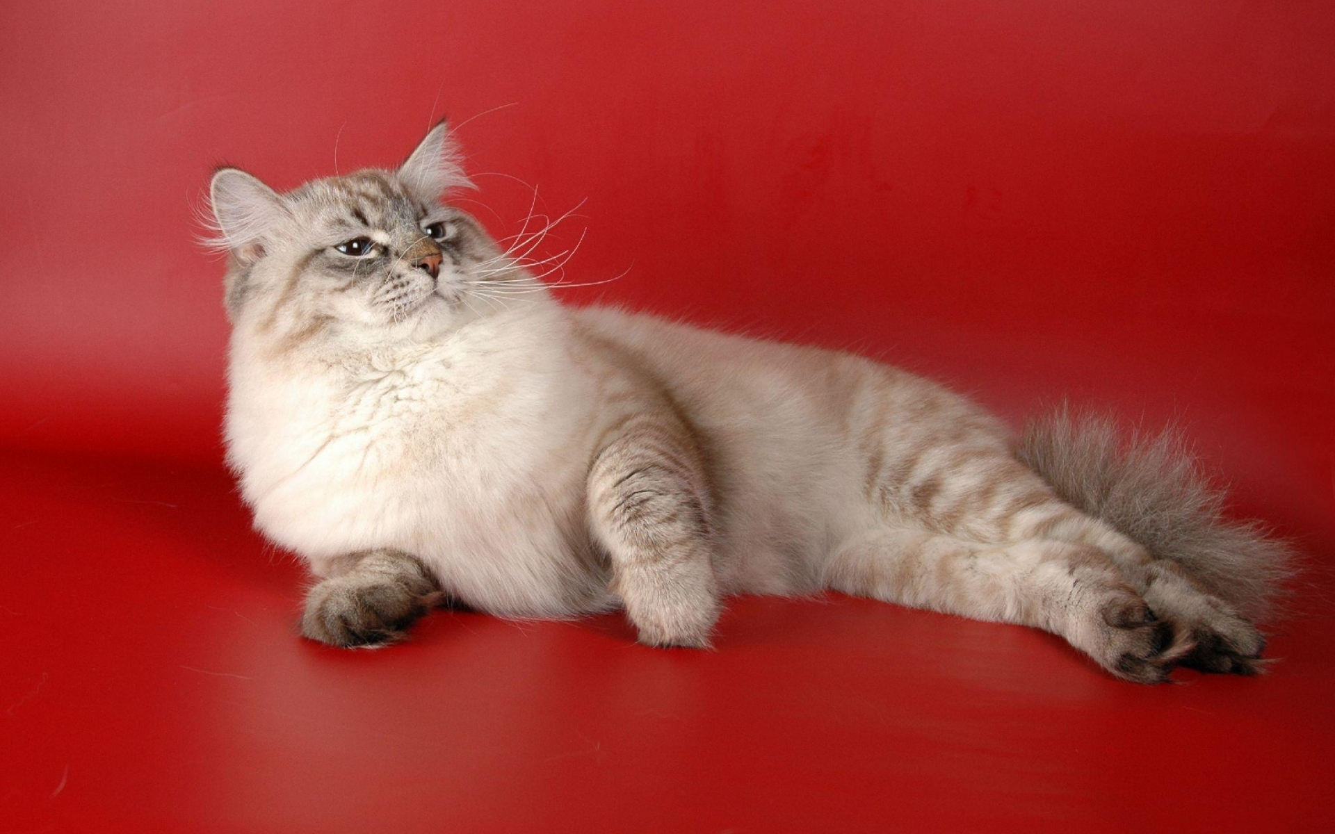 50196 download wallpaper Animals, Cats screensavers and pictures for free