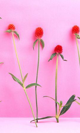 41073 télécharger le fond d'écran Plantes, Fleurs - économiseurs d'écran et images gratuitement