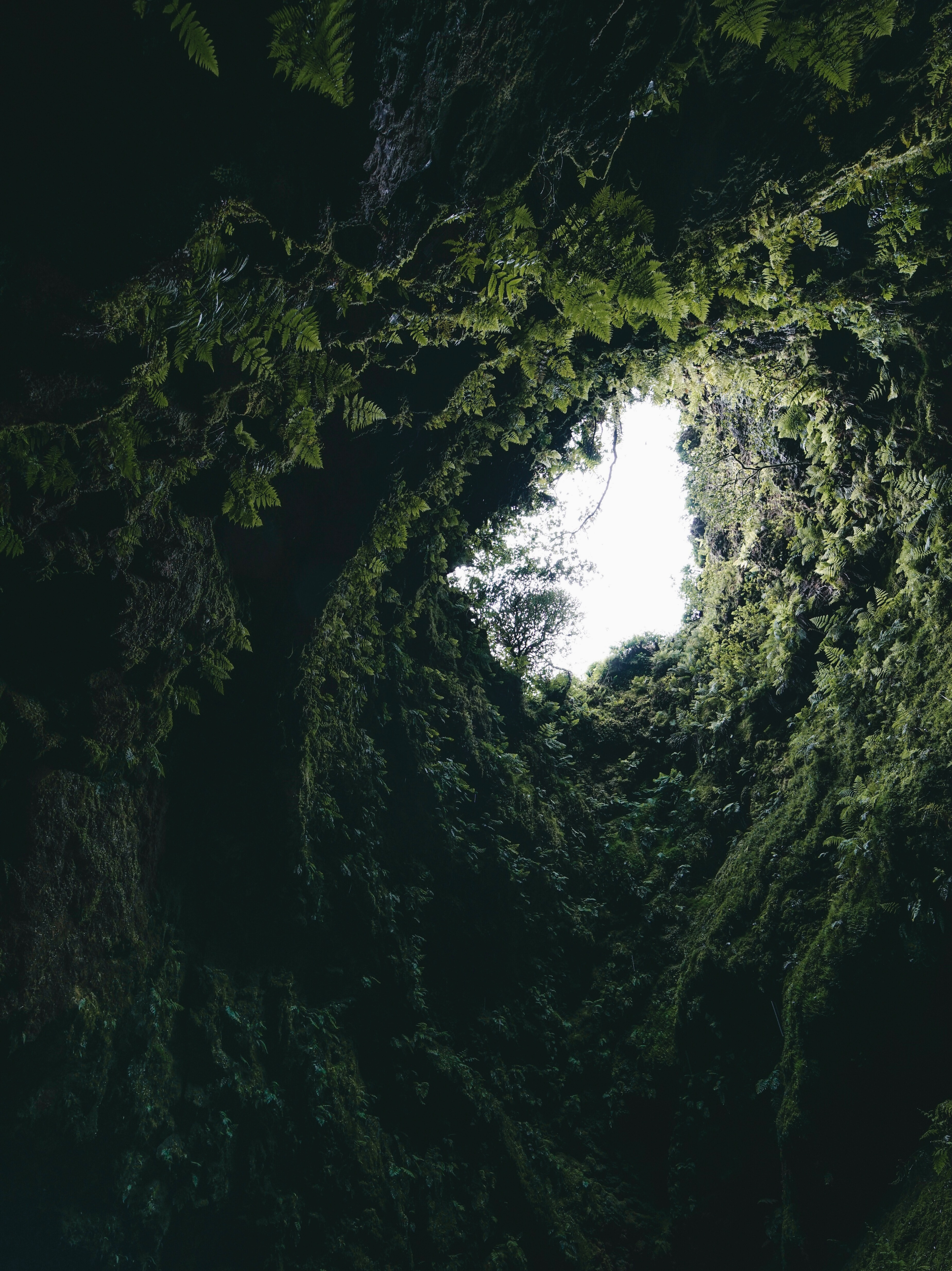 104416 download wallpaper Plants, Nature, Dark, Fern, Moss, Cave screensavers and pictures for free