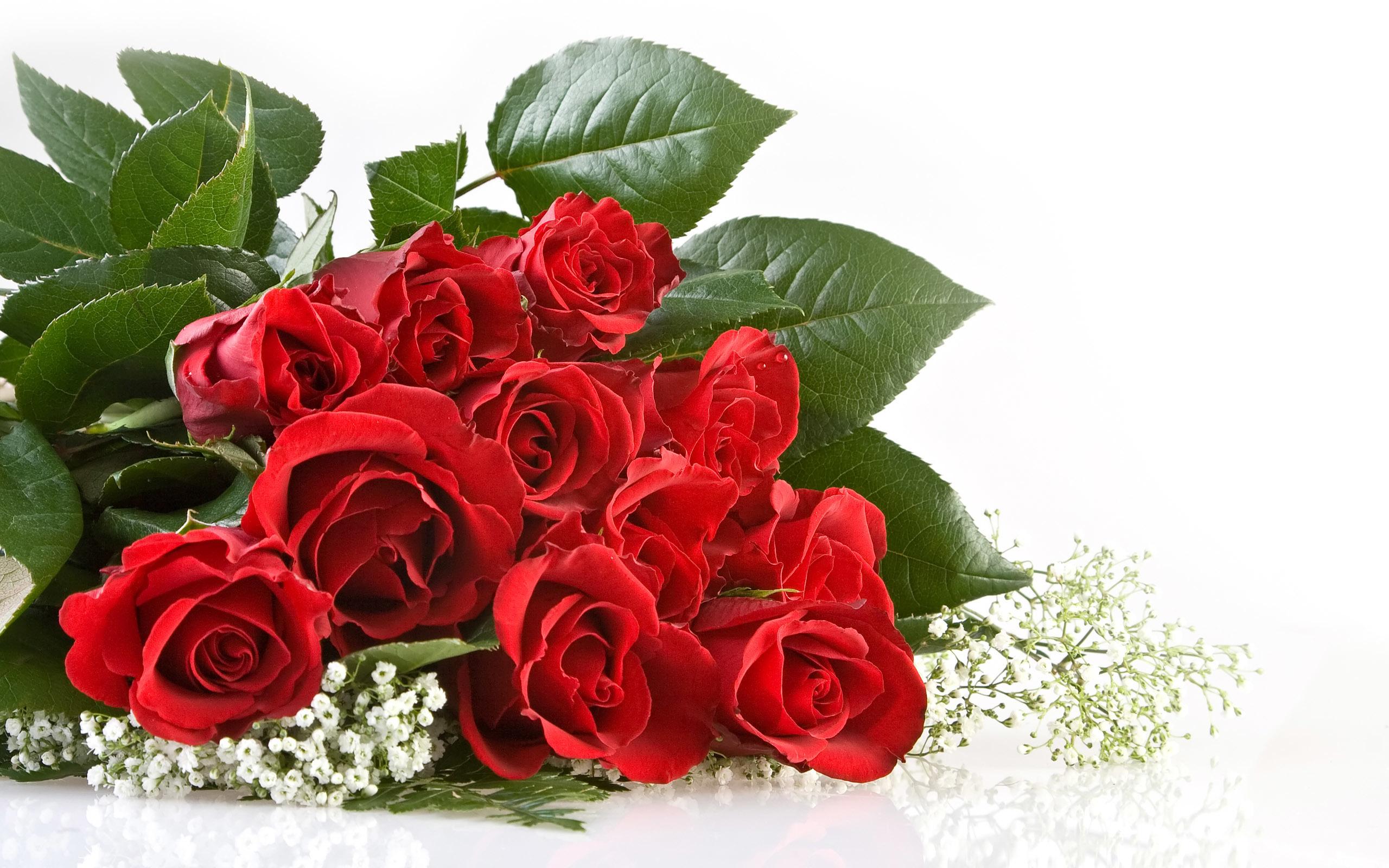 47881 скачать обои Растения, Цветы, Розы - заставки и картинки бесплатно