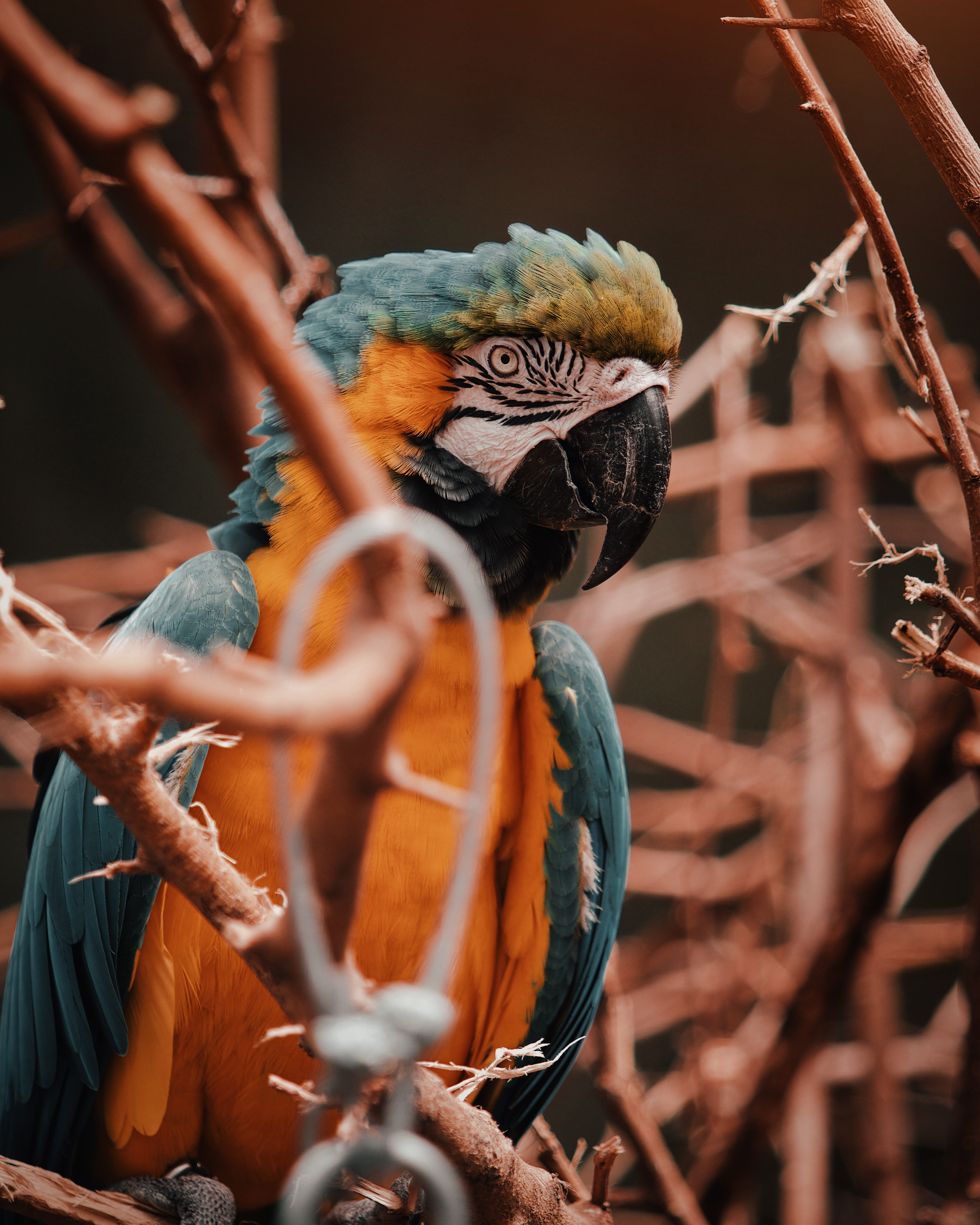 96611 download wallpaper Animals, Parrots, Macaw, Bird, Multicolored, Motley, Branches screensavers and pictures for free