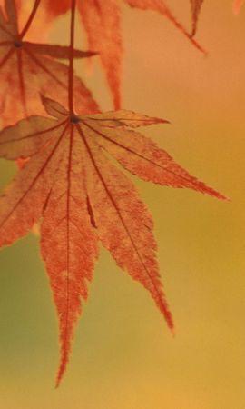 5083 скачать обои Растения, Листья - заставки и картинки бесплатно