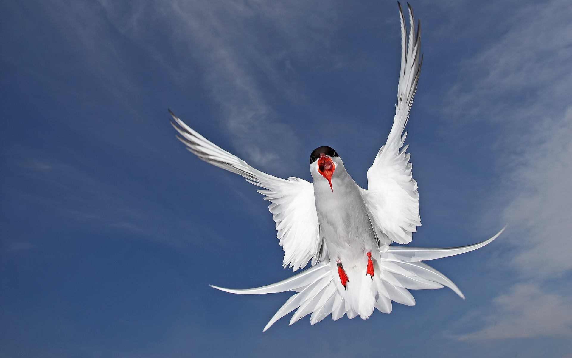 33777 download wallpaper Animals, Birds, Seagulls screensavers and pictures for free