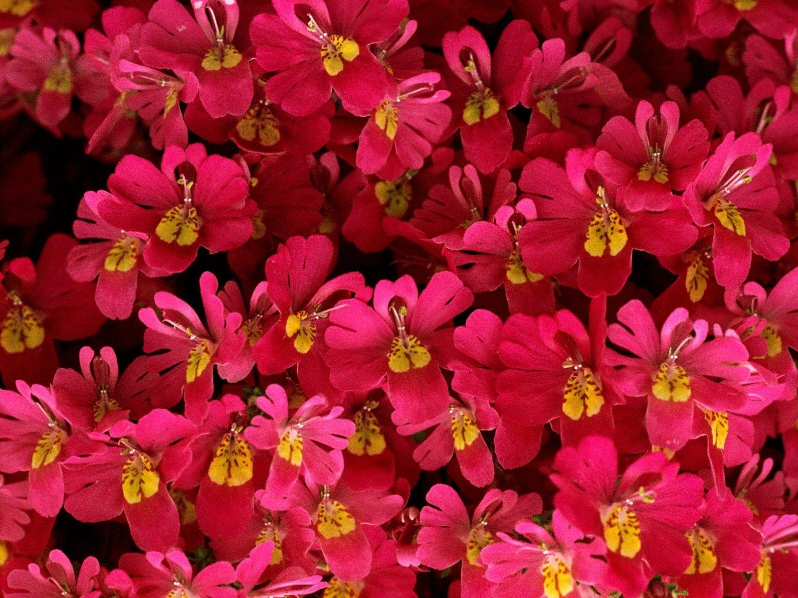 8123 скачать обои Растения, Цветы, Фон - заставки и картинки бесплатно
