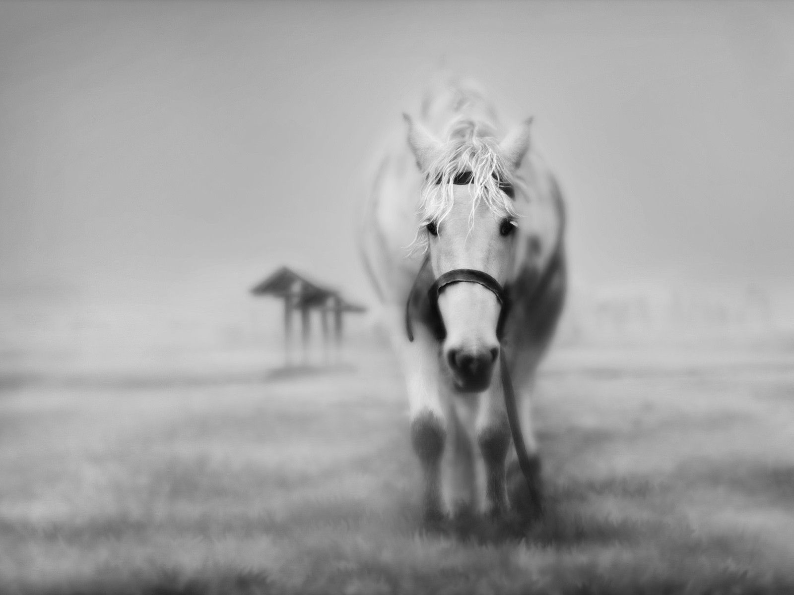 84751 download wallpaper Animals, Horses, Grass, Muzzle, Bw, Chb screensavers and pictures for free
