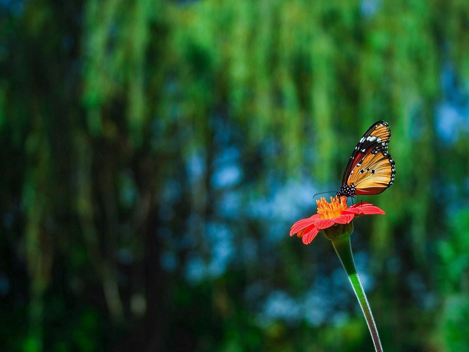 103435 download wallpaper Animals, Butterfly, Flower, Flight, Handsomely, It's Beautiful, Greased, Smeared screensavers and pictures for free