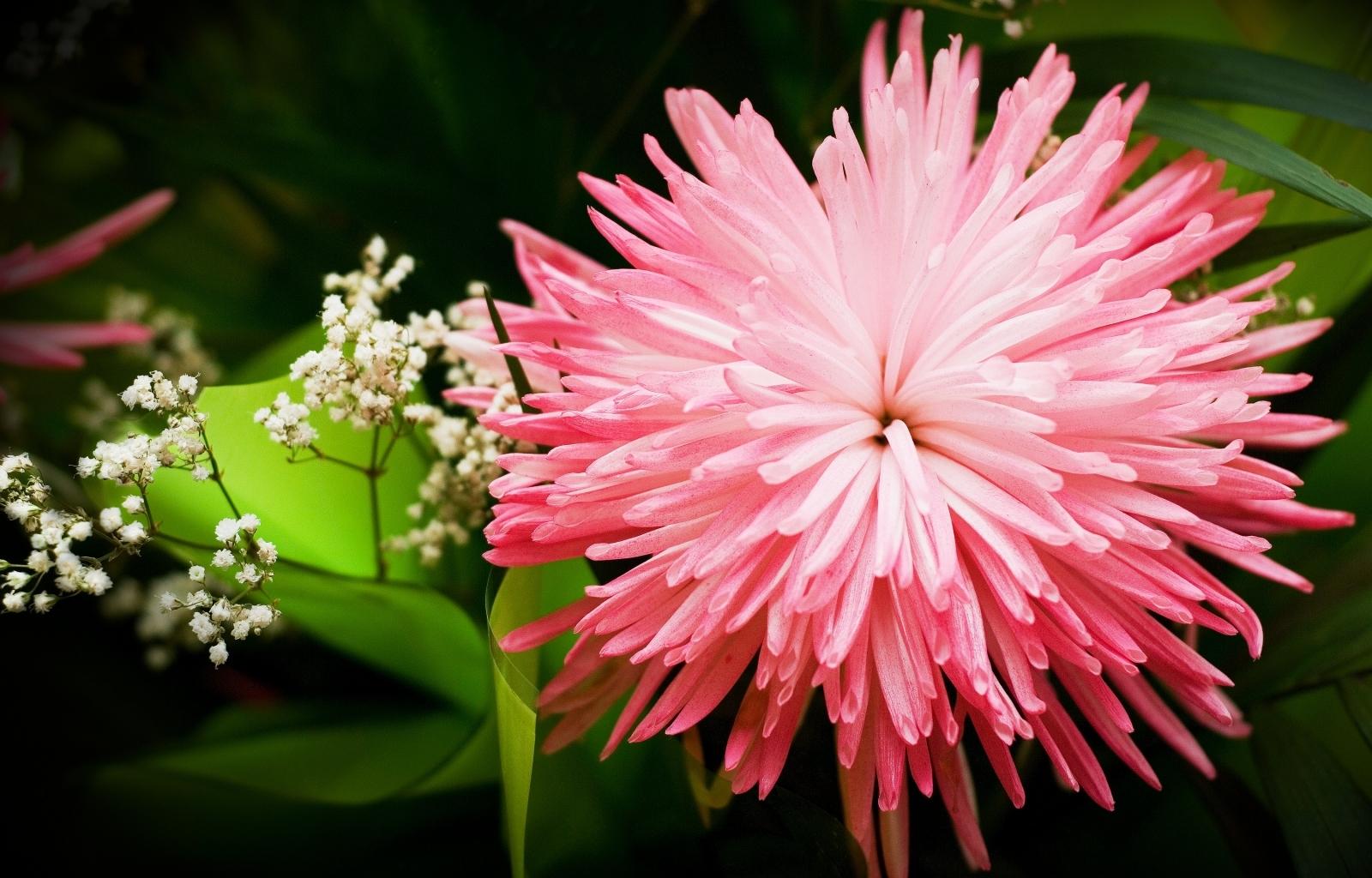 2916 скачать обои Растения, Цветы - заставки и картинки бесплатно