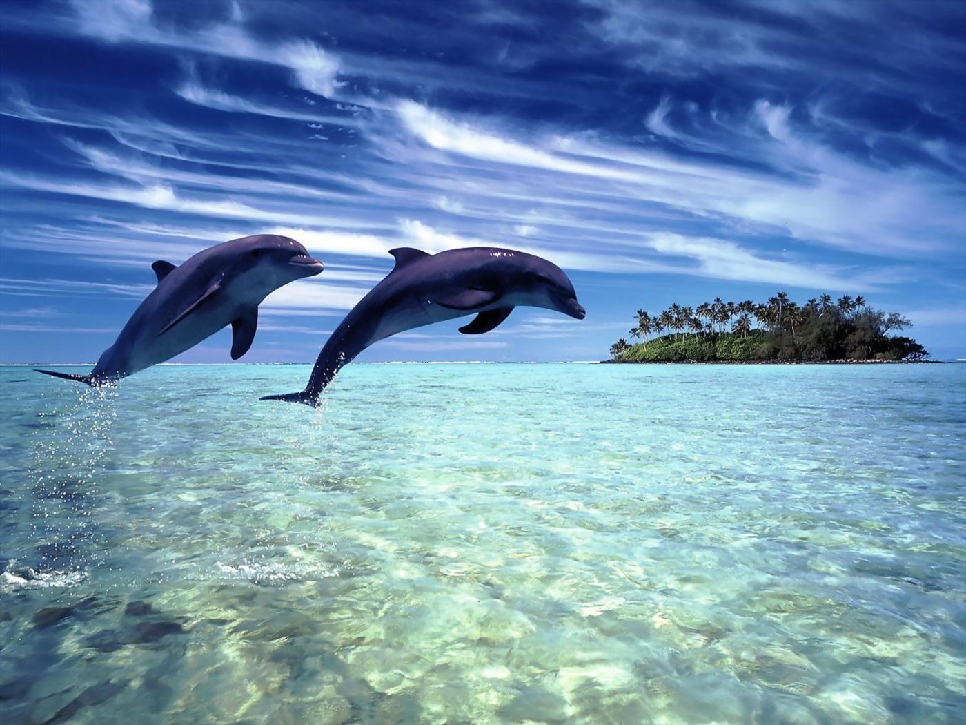 49191 Hintergrundbild 360x640 kostenlos auf deinem Handy, lade Bilder Delfine, Tiere 360x640 auf dein Handy herunter