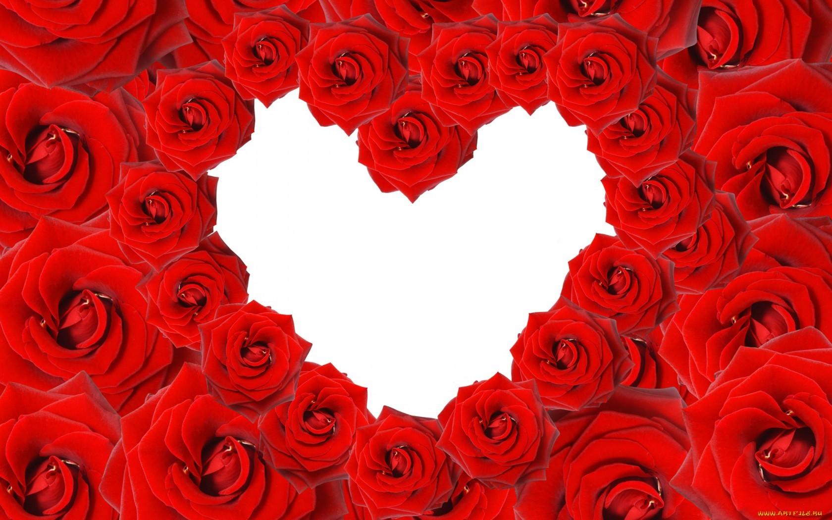 20354 télécharger le fond d'écran Fêtes, Fleurs, Contexte, Roses, Cœurs, Saint Valentin - économiseurs d'écran et images gratuitement