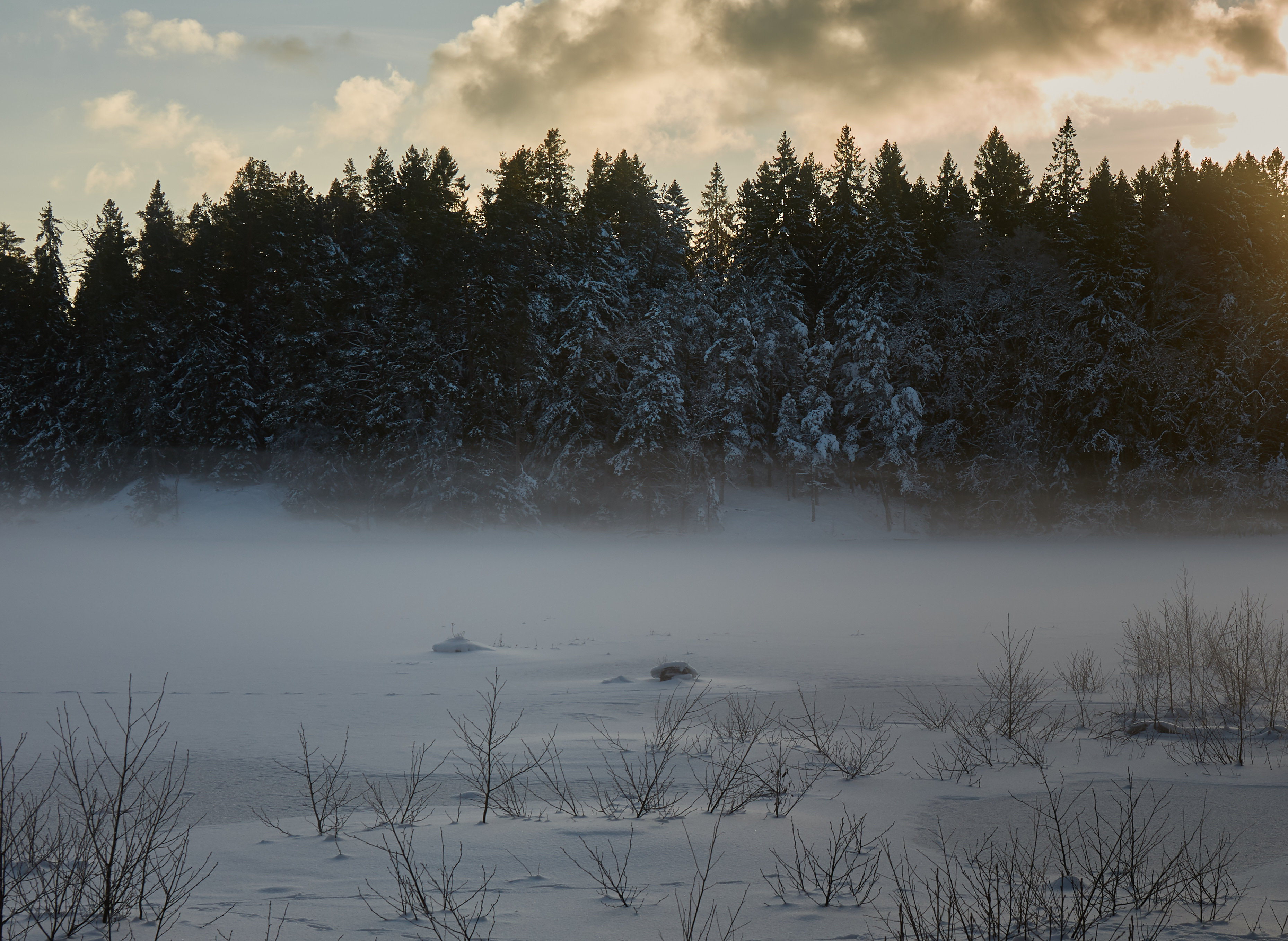 85414 download wallpaper Trees, Snow, Winter, Nature, Fir-Trees screensavers and pictures for free