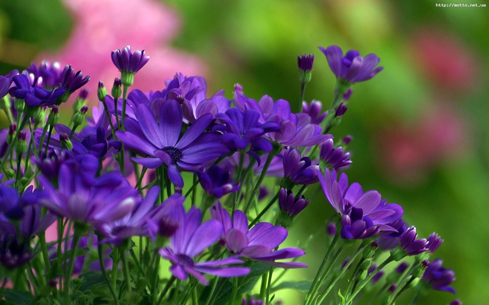 8271 скачать обои Растения, Цветы - заставки и картинки бесплатно