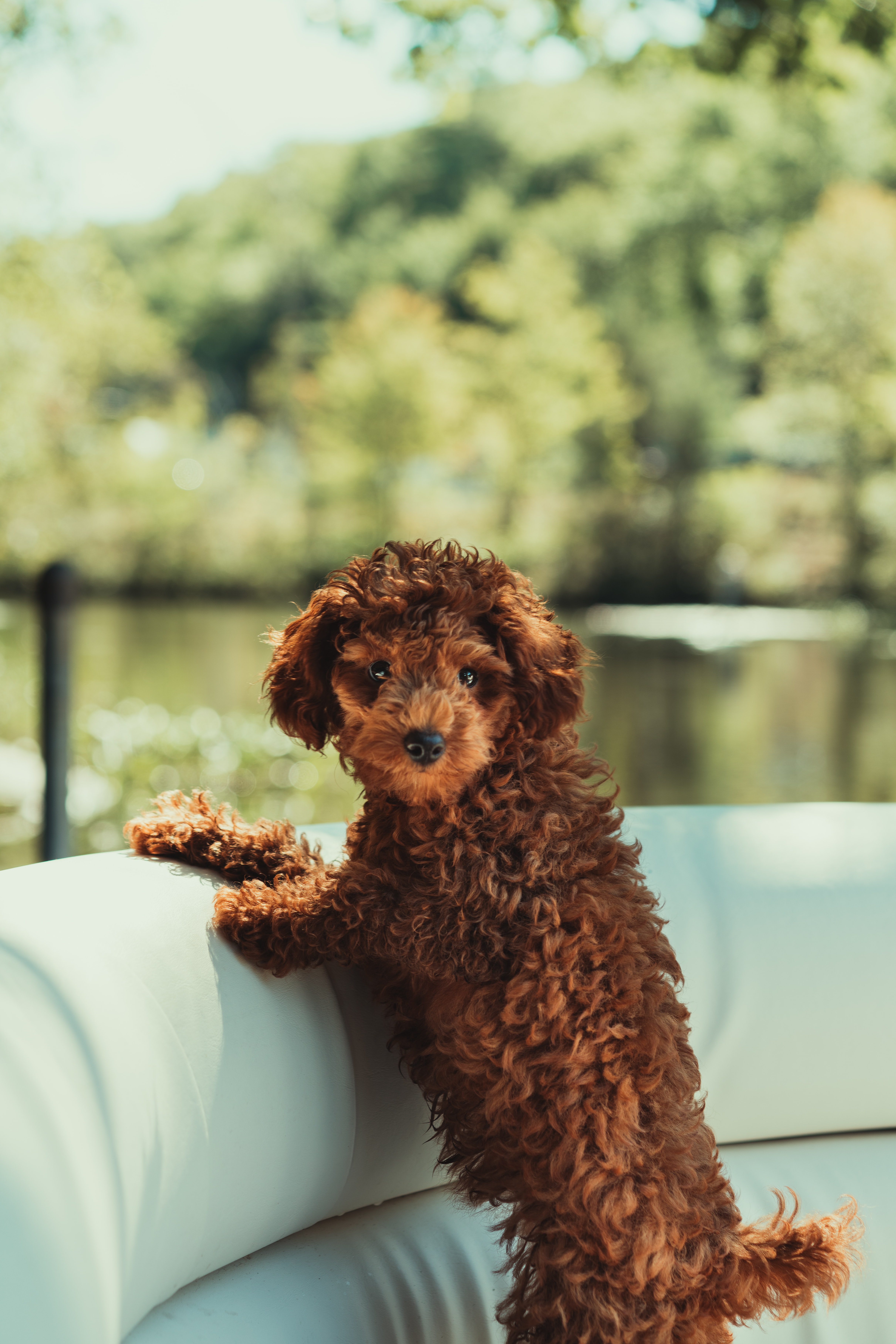 52388 download wallpaper Animals, Puppy, Nice, Sweetheart, Pet, Funny screensavers and pictures for free