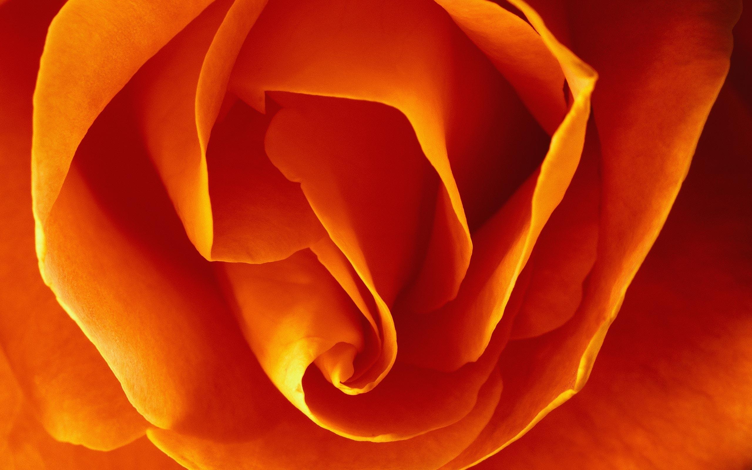 8315 скачать обои Растения, Цветы, Фон, Розы - заставки и картинки бесплатно