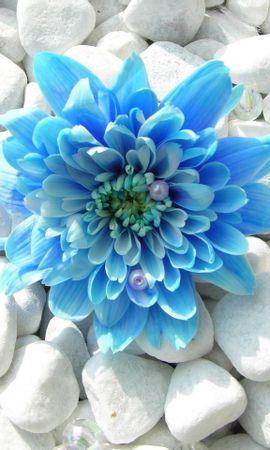 14104 скачать обои Растения, Цветы - заставки и картинки бесплатно