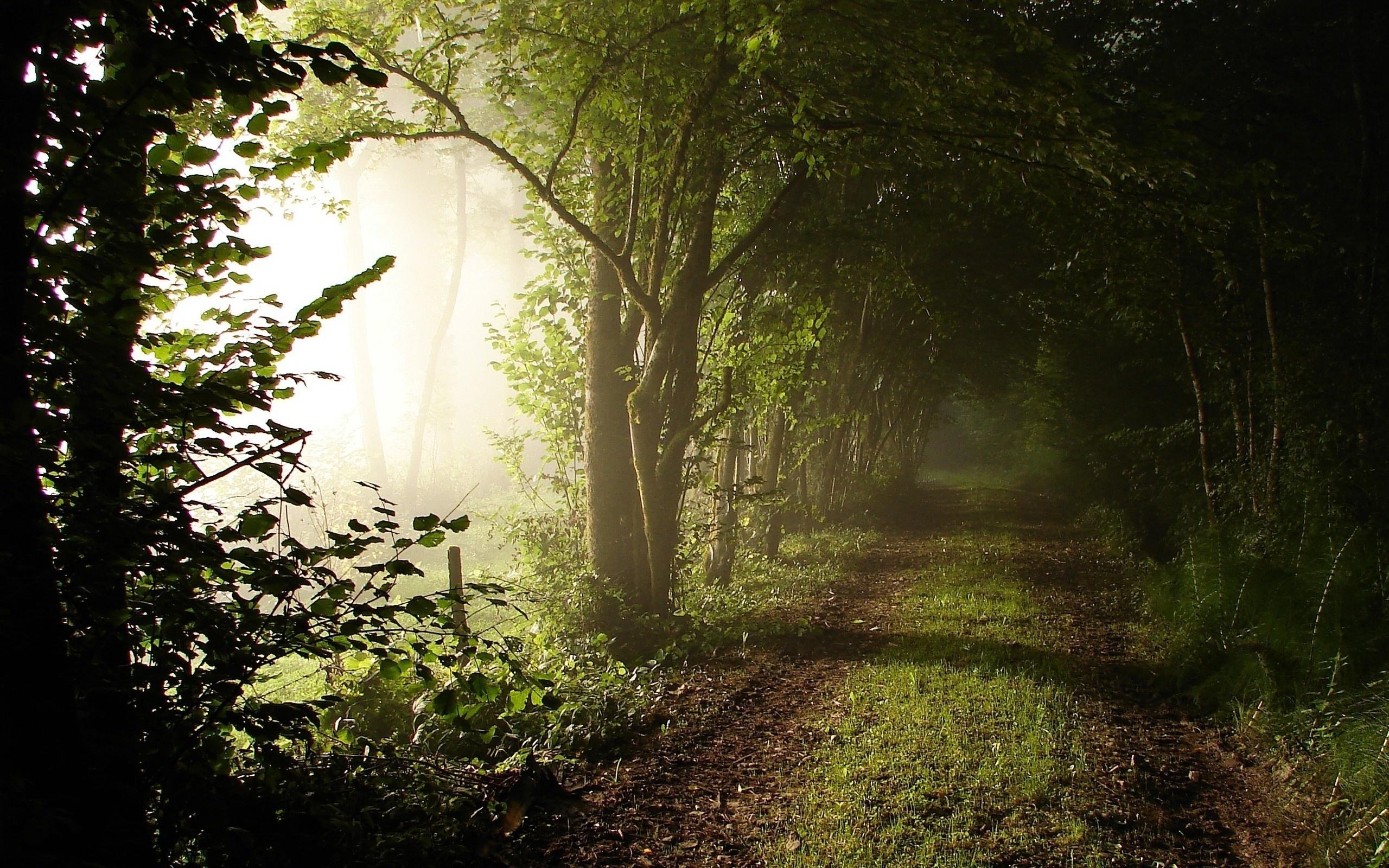 46046 скачать обои Пейзаж, Природа, Деревья - заставки и картинки бесплатно