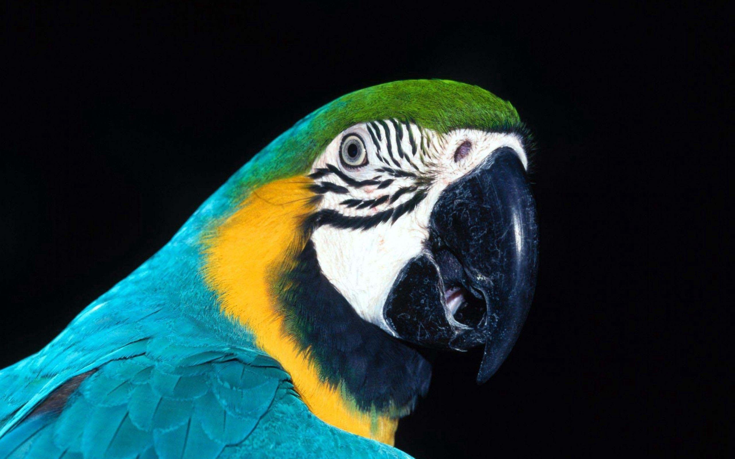100156 Hintergrundbild 240x400 kostenlos auf deinem Handy, lade Bilder Tiere, Papageien, Vogel, Schnabel, Farbe 240x400 auf dein Handy herunter