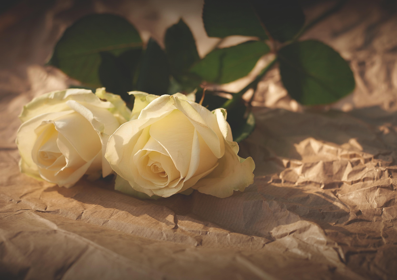 74314 скачать обои Цветы, Пара, Бумага, Тень, Розы - заставки и картинки бесплатно