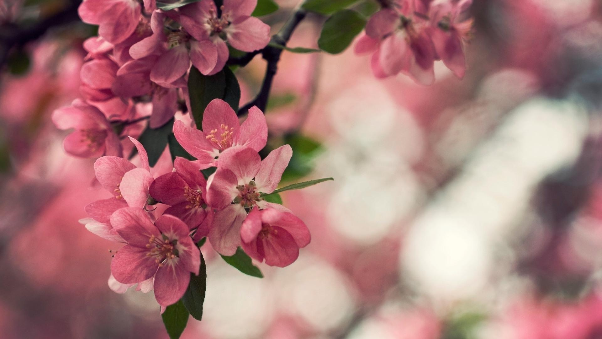 28322 скачать обои Растения, Цветы - заставки и картинки бесплатно