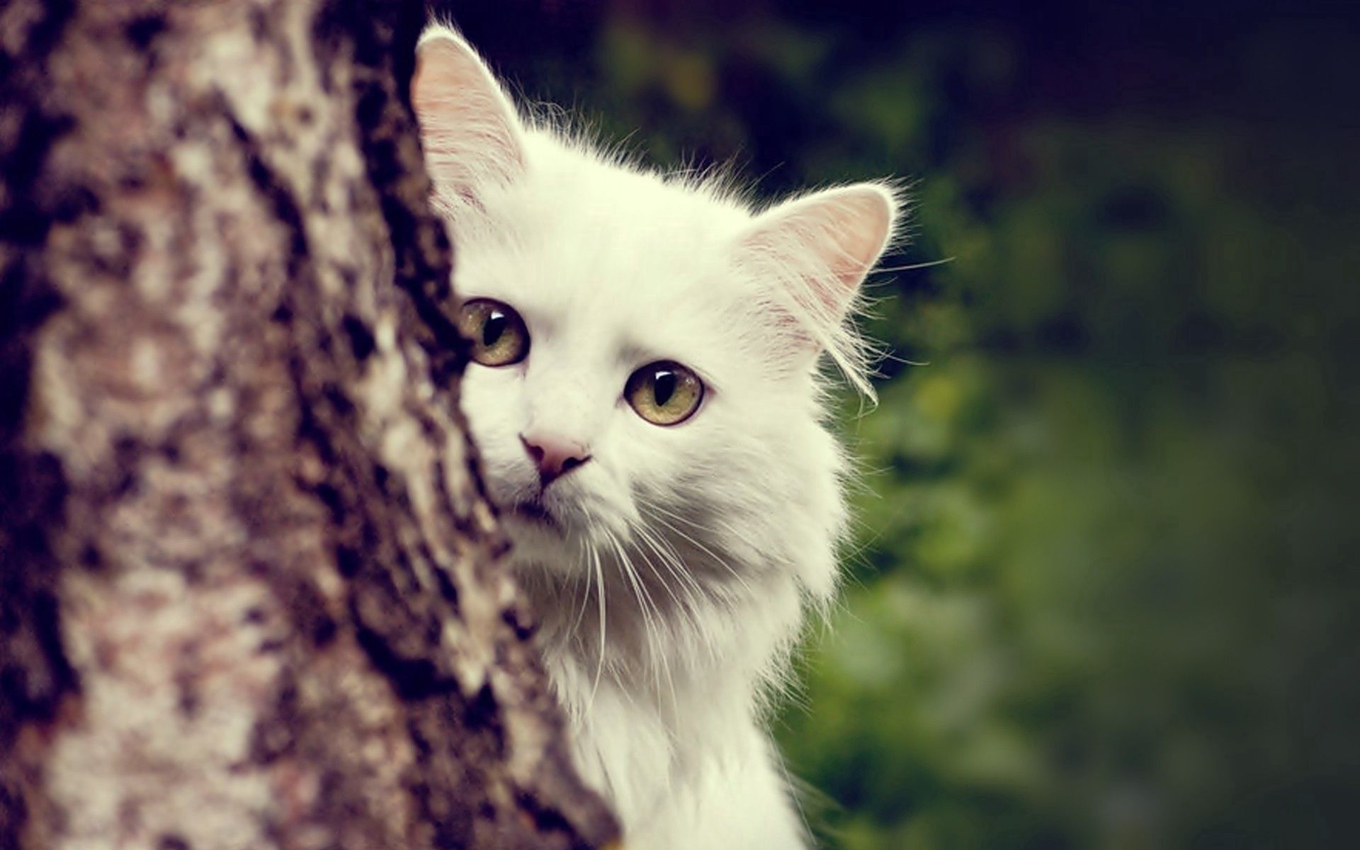 110572 download wallpaper Animals, Cat, Fluffy, Peek Out, Look Out, Wood, Tree screensavers and pictures for free