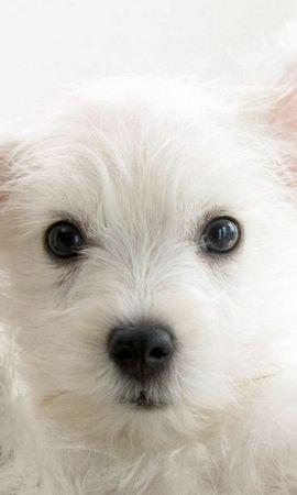 46939 baixar papel de parede Animais, Cães - protetores de tela e imagens gratuitamente