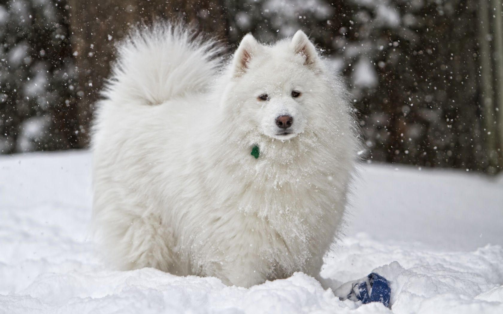 149201 download wallpaper Animals, Dog, Snow, Winter screensavers and pictures for free